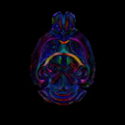 Mouse Brain 21-Direction ex vivo DTI