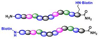 n-terminal-or-c-terminal-biotinylation