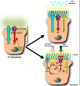 Therapeutic Strategies to Rehydrate CF Airway Surfaces