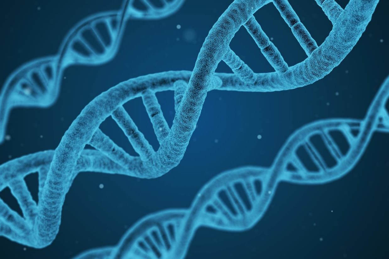 DNA and the Gene Therapy Center