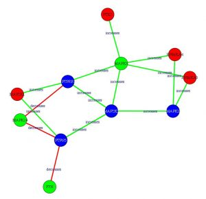 Graves Network Analysis