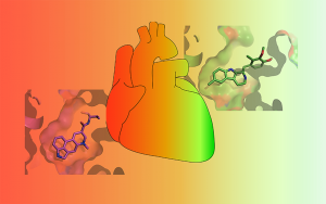 Drugs vary in their ability to activate the 5-HT2B serotonin receptor. Some drugs (RED) strongly activate the receptor and cause potentially life-threatening valvular heart disease while others only weakly activate it (GREEN) and are less likely to cause serious side-effects.