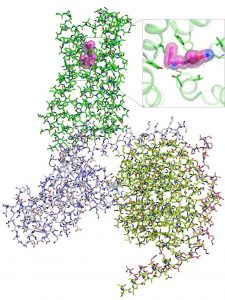 chemical 3-D structures of amino acids in pink, green and violet bound together as described in the caption.
