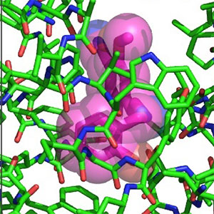 close up of the chemical 3-D structures of amino acids in pink, green and violet.