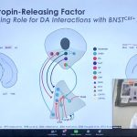 """Slide with diagrams of the brain and a little insert of Waylin's face in the right bottom corner. Title of the slide is """"Corticotropin-Releasing Factor: An Emerging Role for DA Interactions with BNSTCRF+ in Pain."""""""