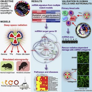 Graphical Abstract for NASA spaceflight study published in Cell Reports November 27, 2020: Circulating miRNA Spaceflight Signature Reveals Targets for Countermeasure Development